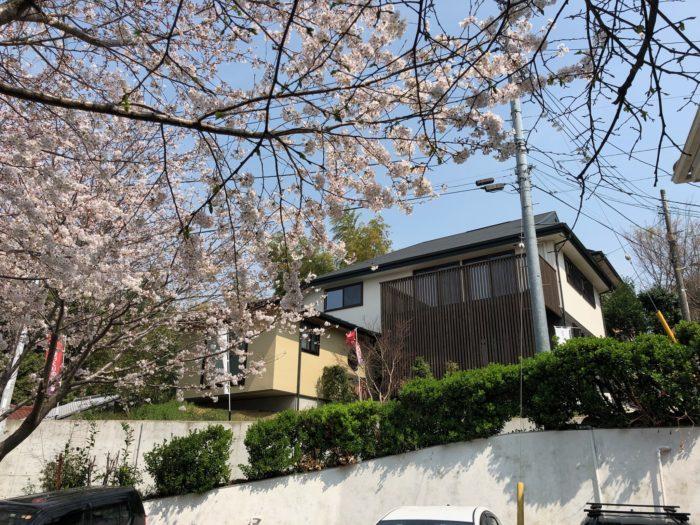 モデルハウスと桜